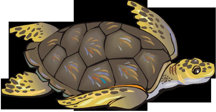 Turtle · Sea turtle clip art hdclipartall.com