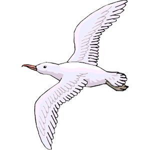 Seagull clip art clipart free - Seagull Clipart