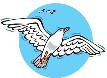 Seagull vector 5; Seagull vector 8