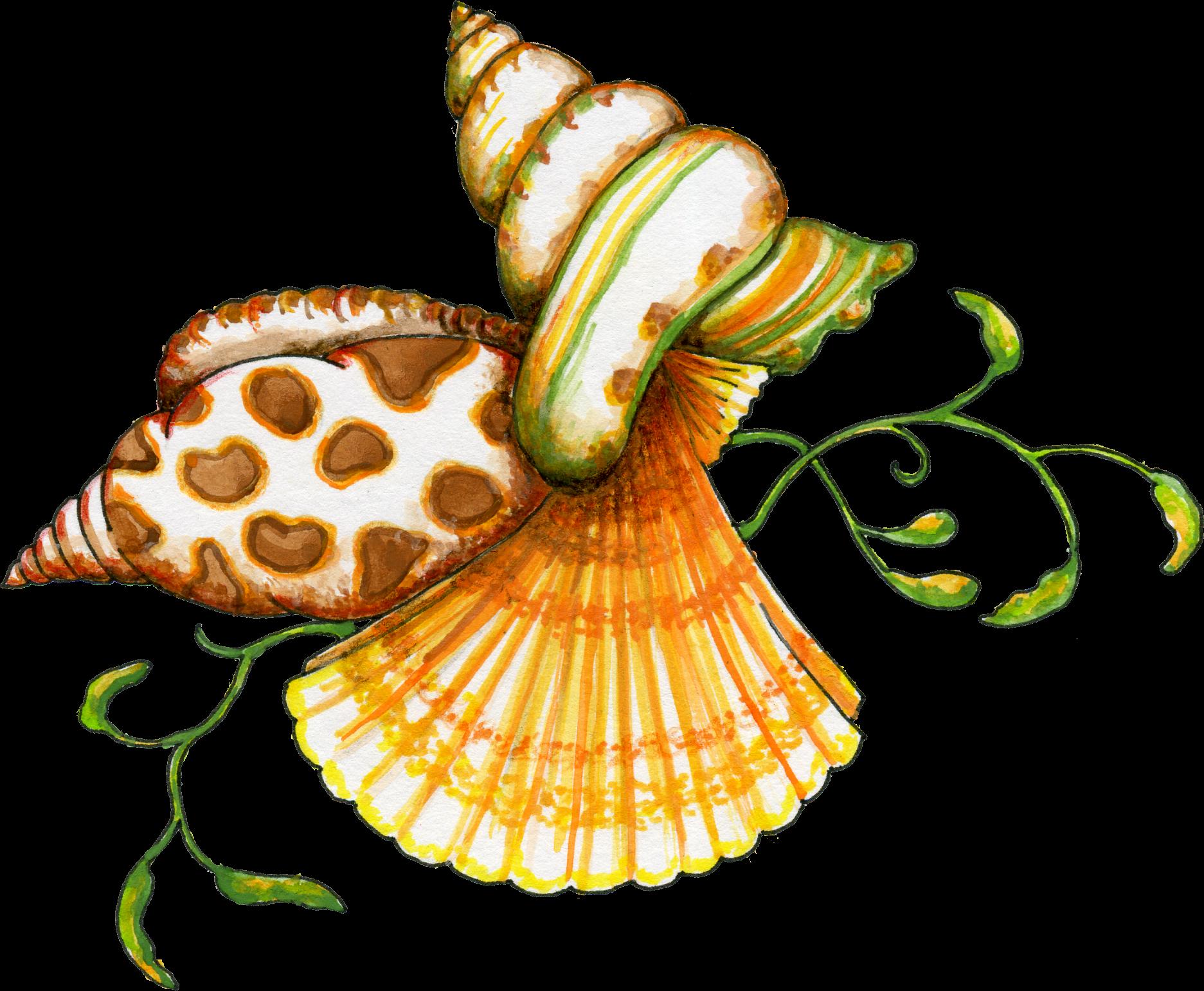 Seashell clip art borders free free clipart images 4