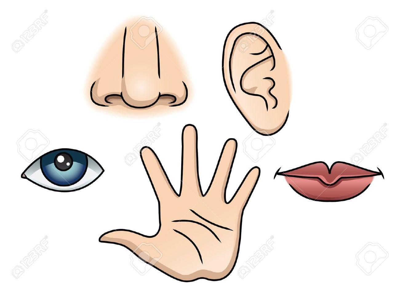 senses: An Illustration . senses: An Illustration . Five Senses Clipart Best