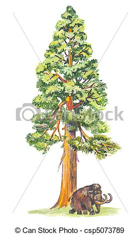 ... Sequoiadendron (Mammoth tree) the largest tree in the world.