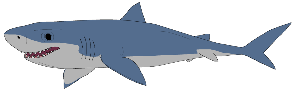 Drawing clipart shark #12 - Shark Clipart