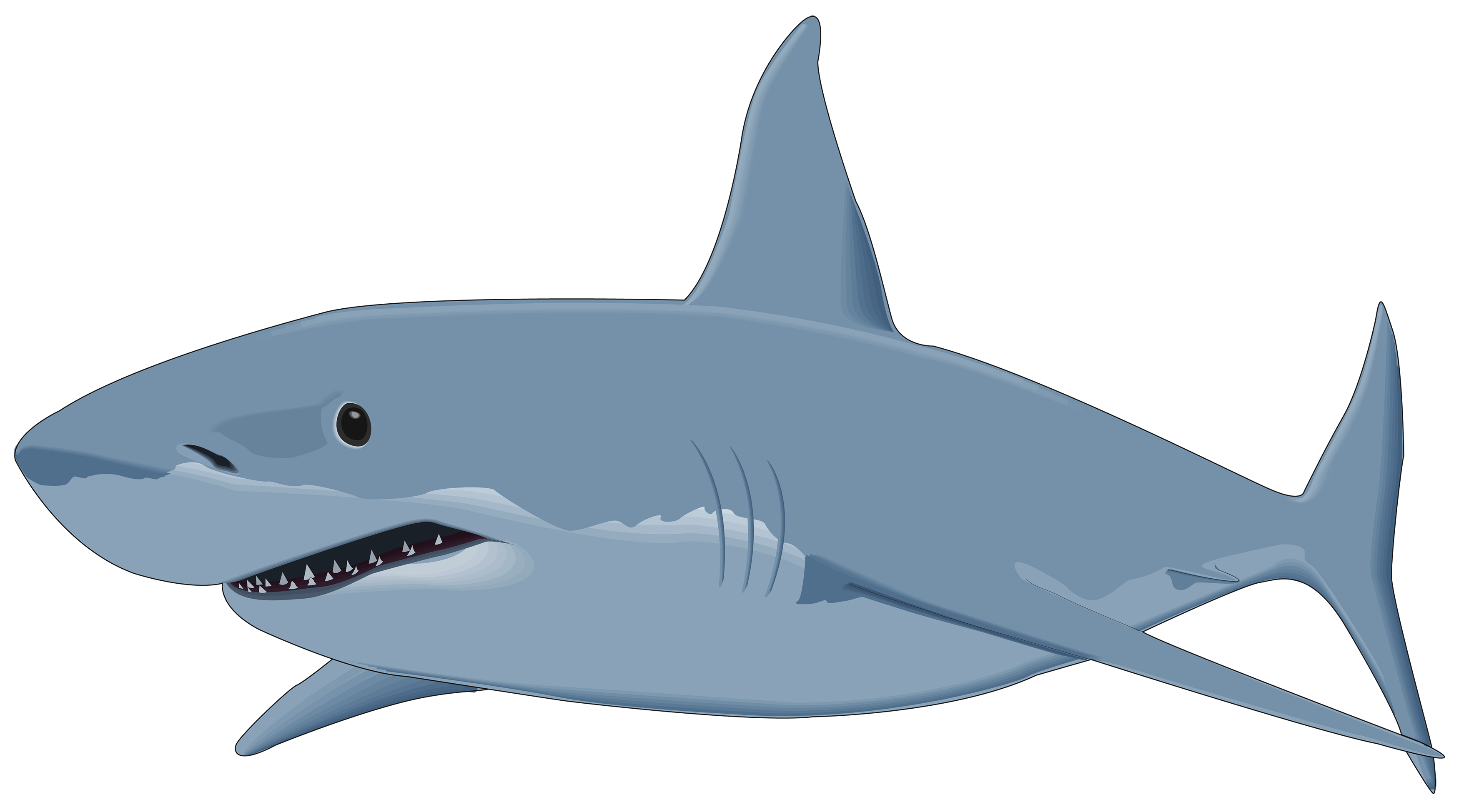 Shark Clipart Transparent Background #2