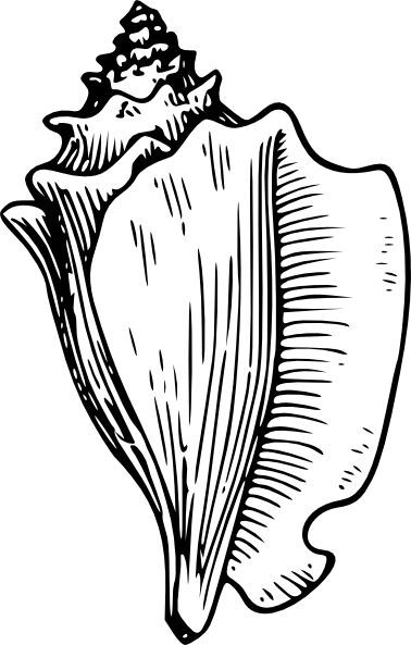 Shell Clip Art Black and White   Conch Large Snail clip art