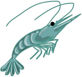 Shrimp clipart kid 2