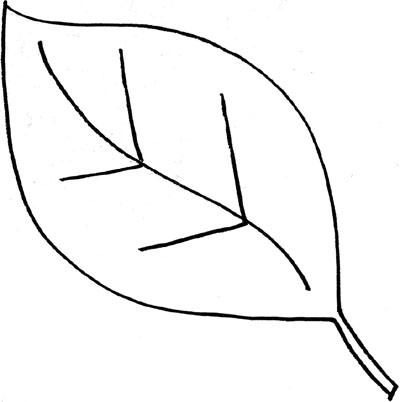 Simple Leaf Outline