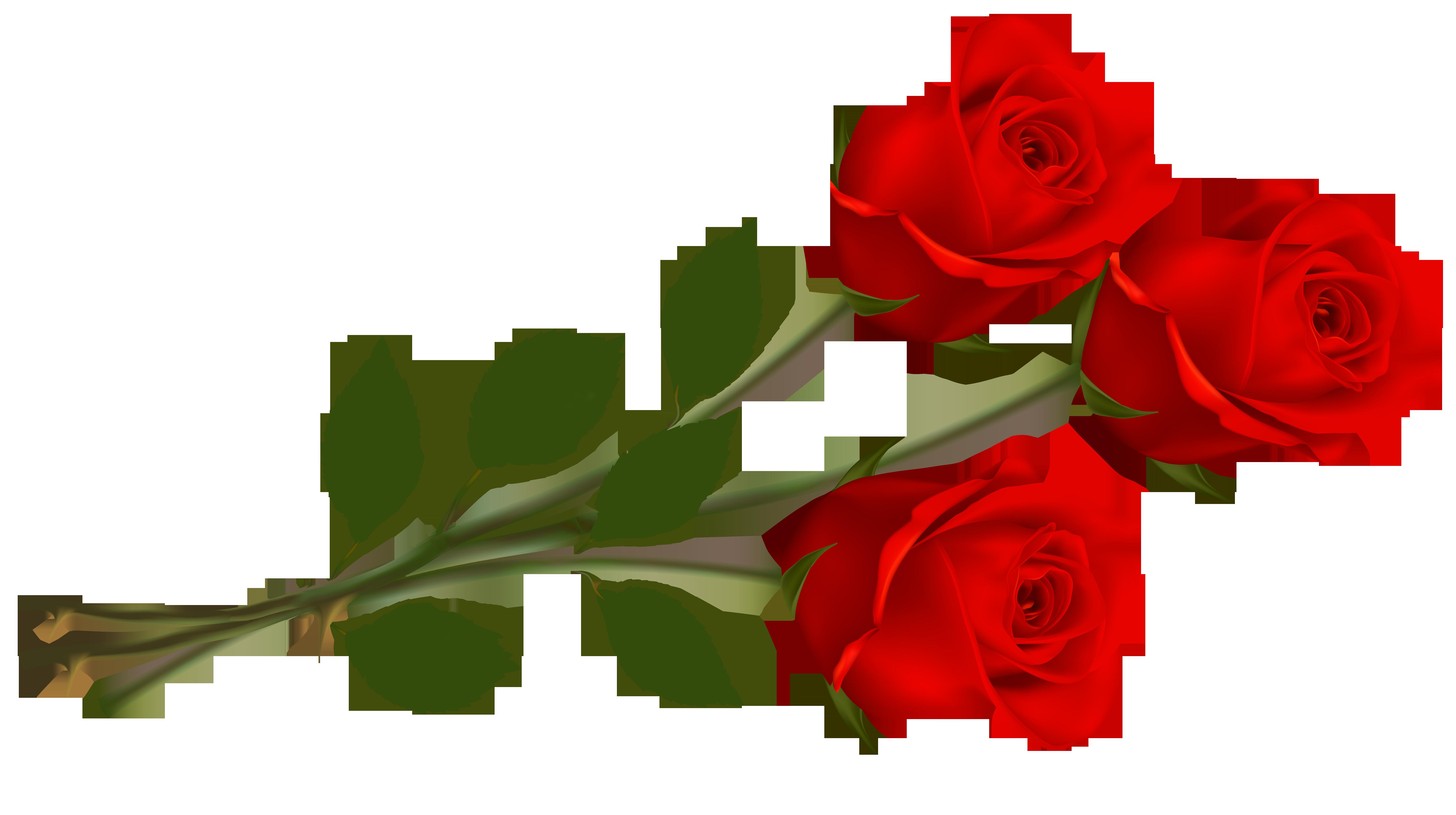 Single Red Rose Clip Art. 499337e244c63137fac26c208707e6 .