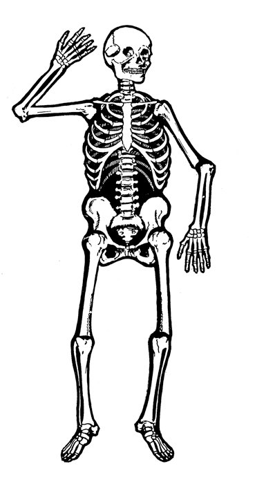 Free skeleton clip art pictures hdclipartall 2