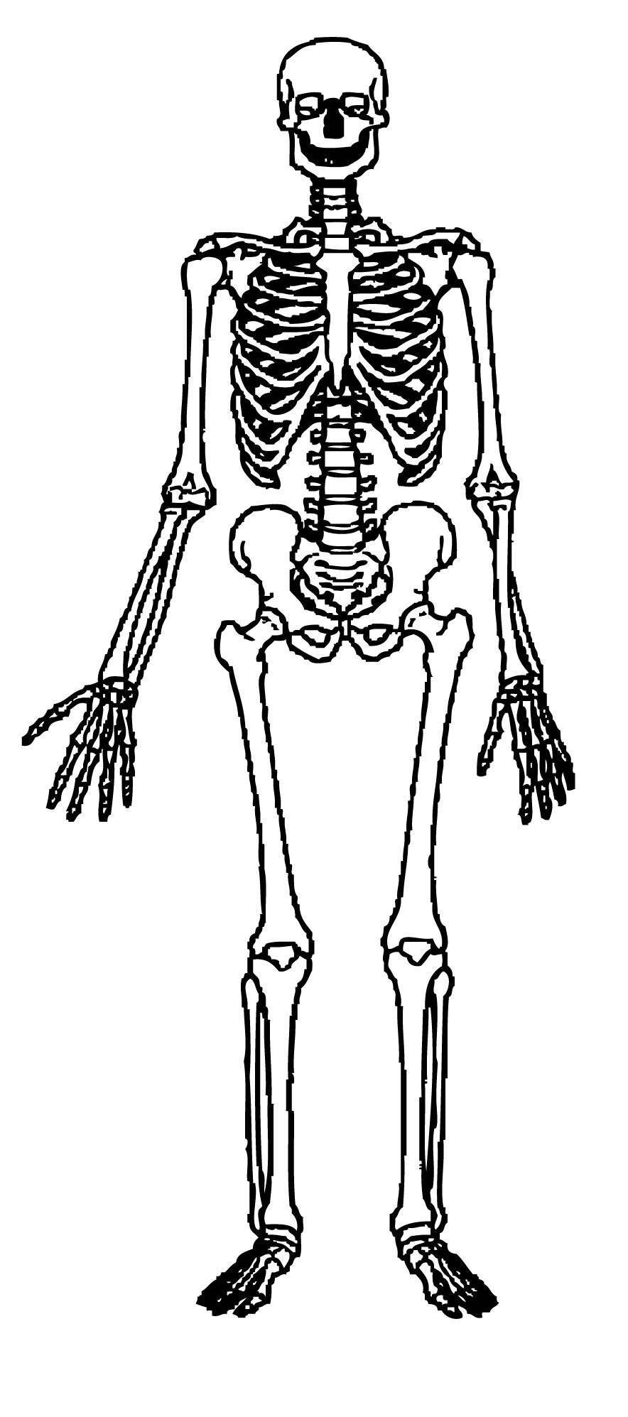 Skeleton clipart free clipart images clipartcow