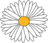 sketch wild flower resembling a daisy u0026middot; daisy isolated