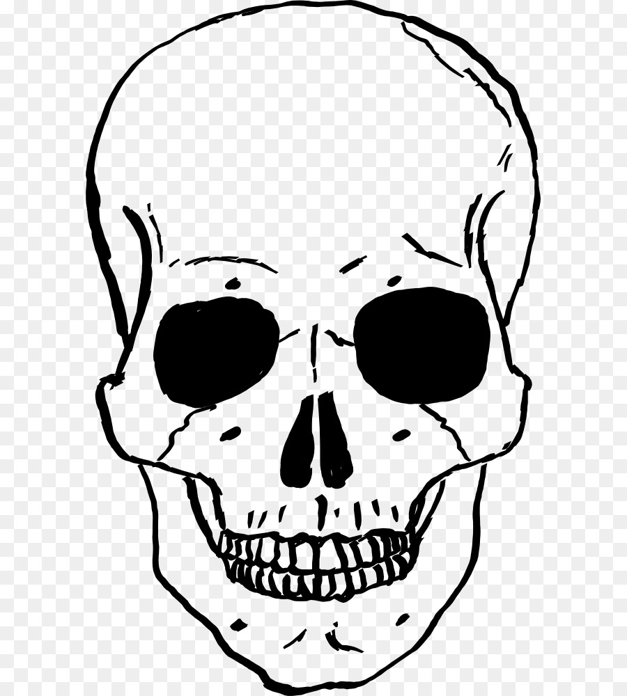 Skull Human skeleton Drawing  - Skull Clipart