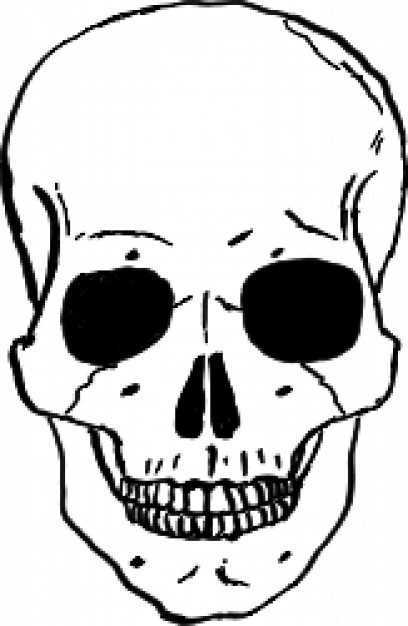 Skull viewed from front