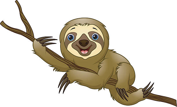 sloth clip art sloth clipart illustration pencil and in color sloth clipart  science clipart