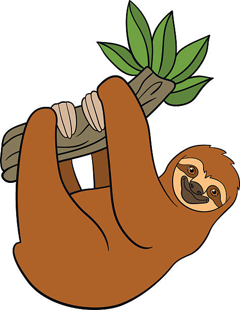 South American Tree Sloth Hanging From Branch Clip Art, Vector Images u0026  Illustrations