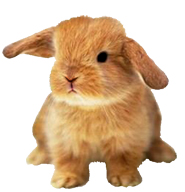... small evil Easter Bunny clipart