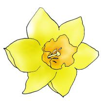 spring clipart daffodil .