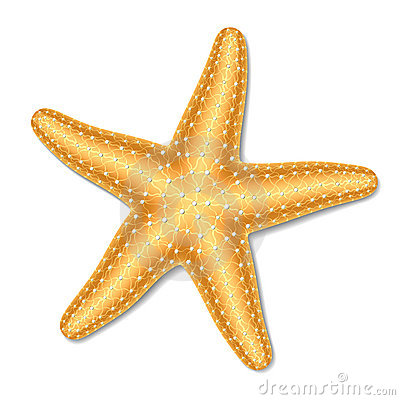 Starfish Stock Illustrations  - Starfish Clipart