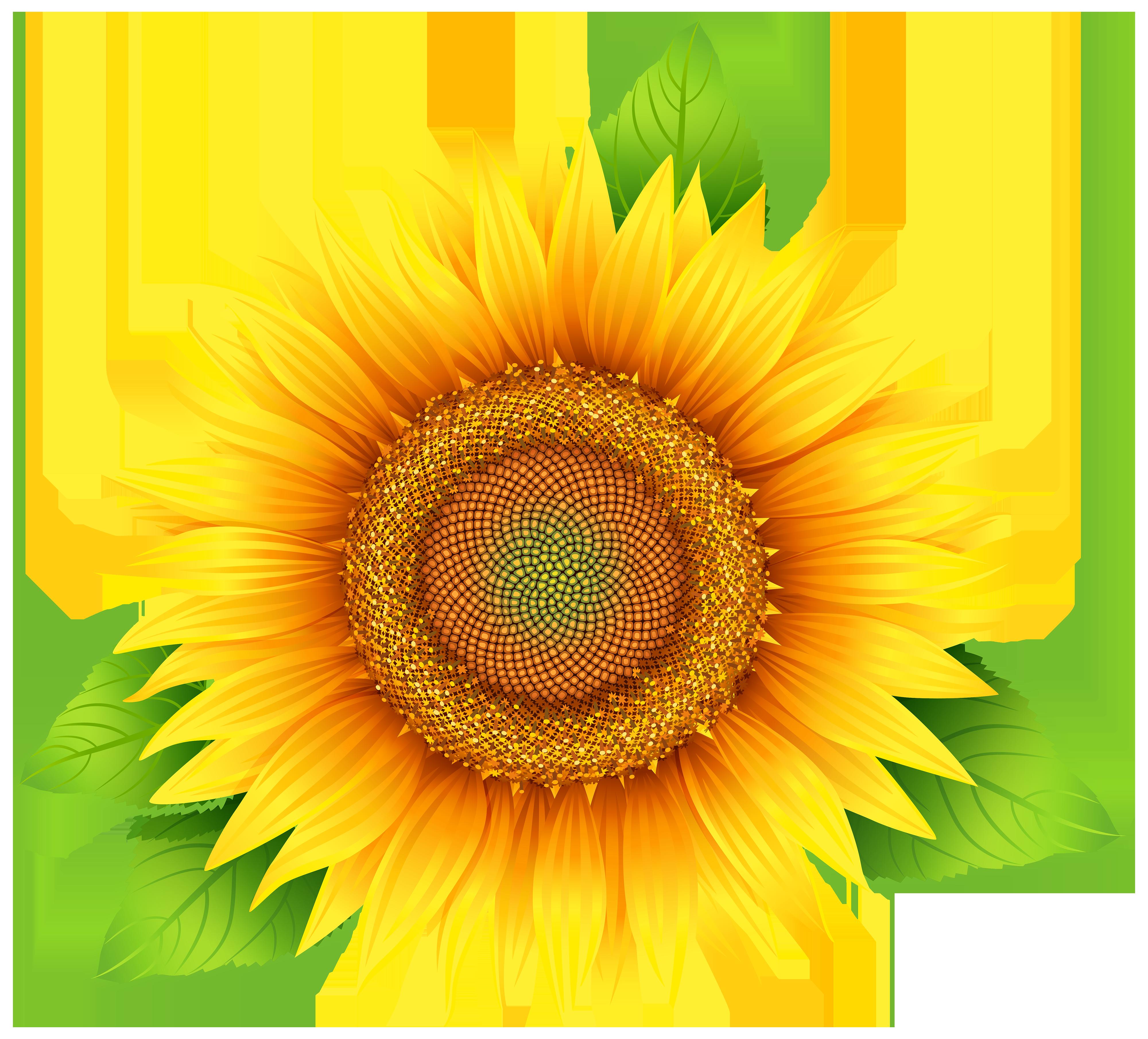 Sunflower clip art at vector clip art clipartbold 2