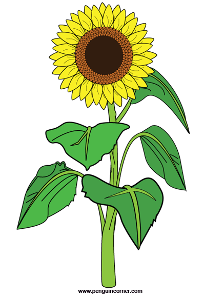 Sunflower clipart 1
