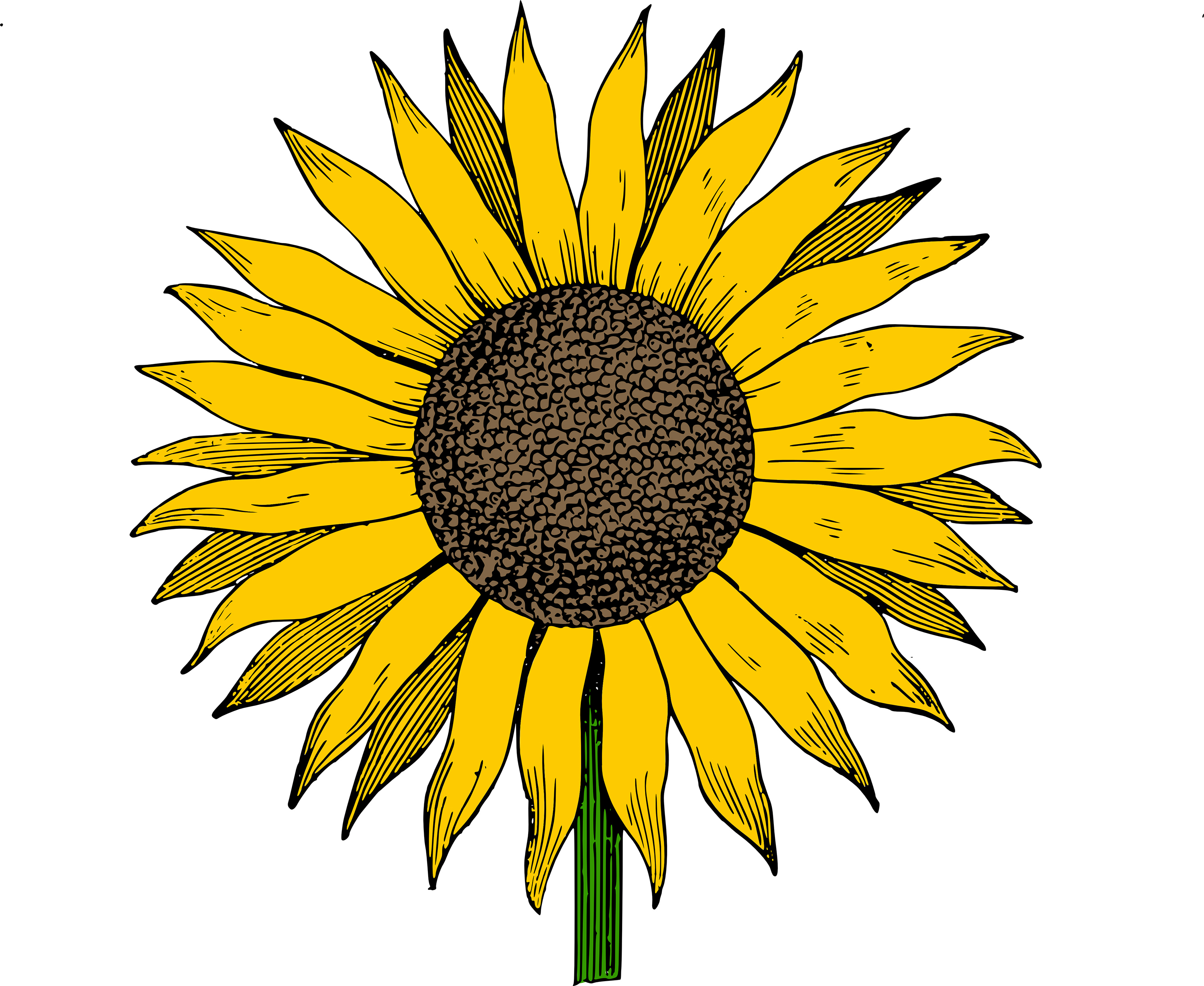 Sunflower clipart clipart cliparts for you