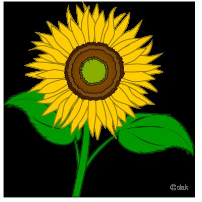 Sunflower clipart image 9