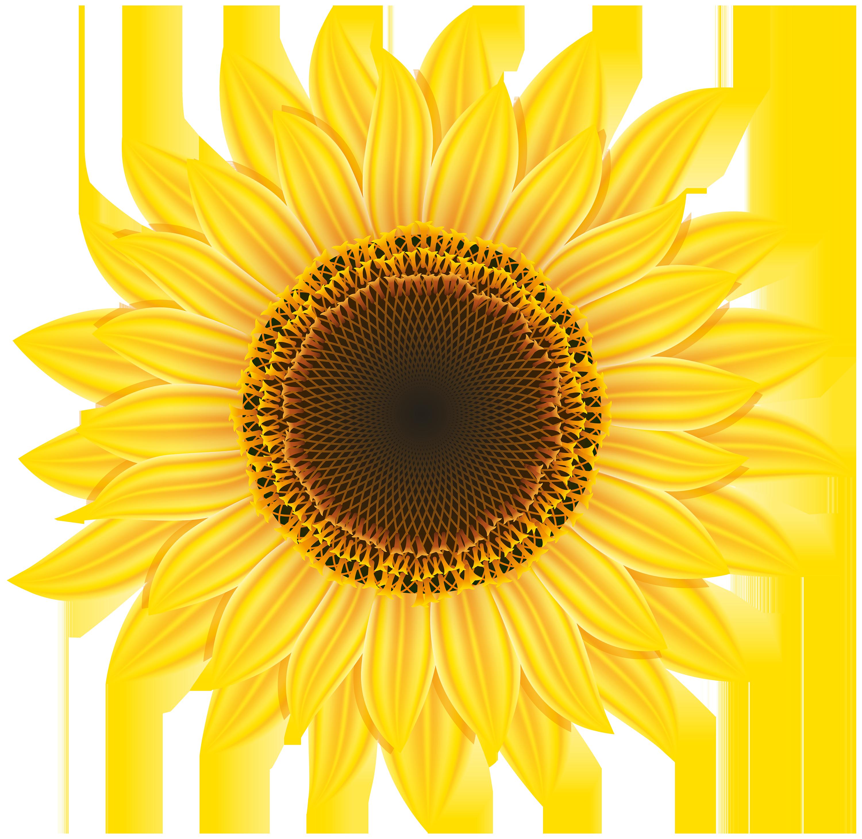 Sunflower clipart web