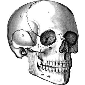 The Skull Clipart