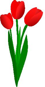 Three Red Tulips