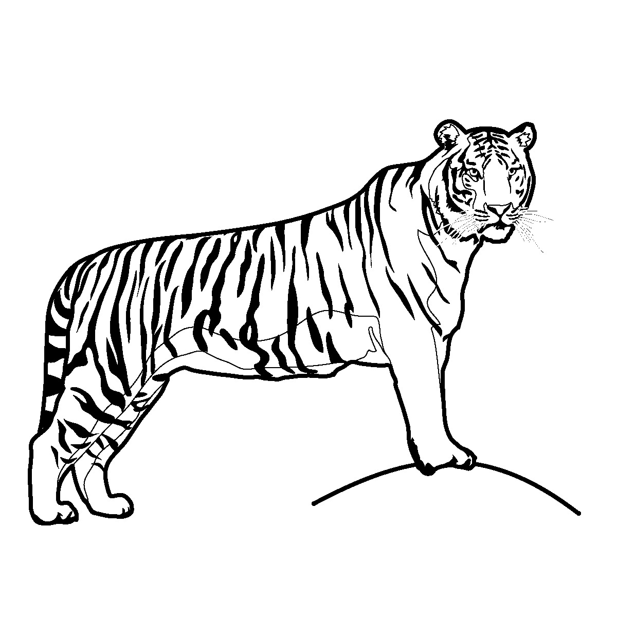 Tiger Clipart Black And White Free Clipart Panda Free Clipart