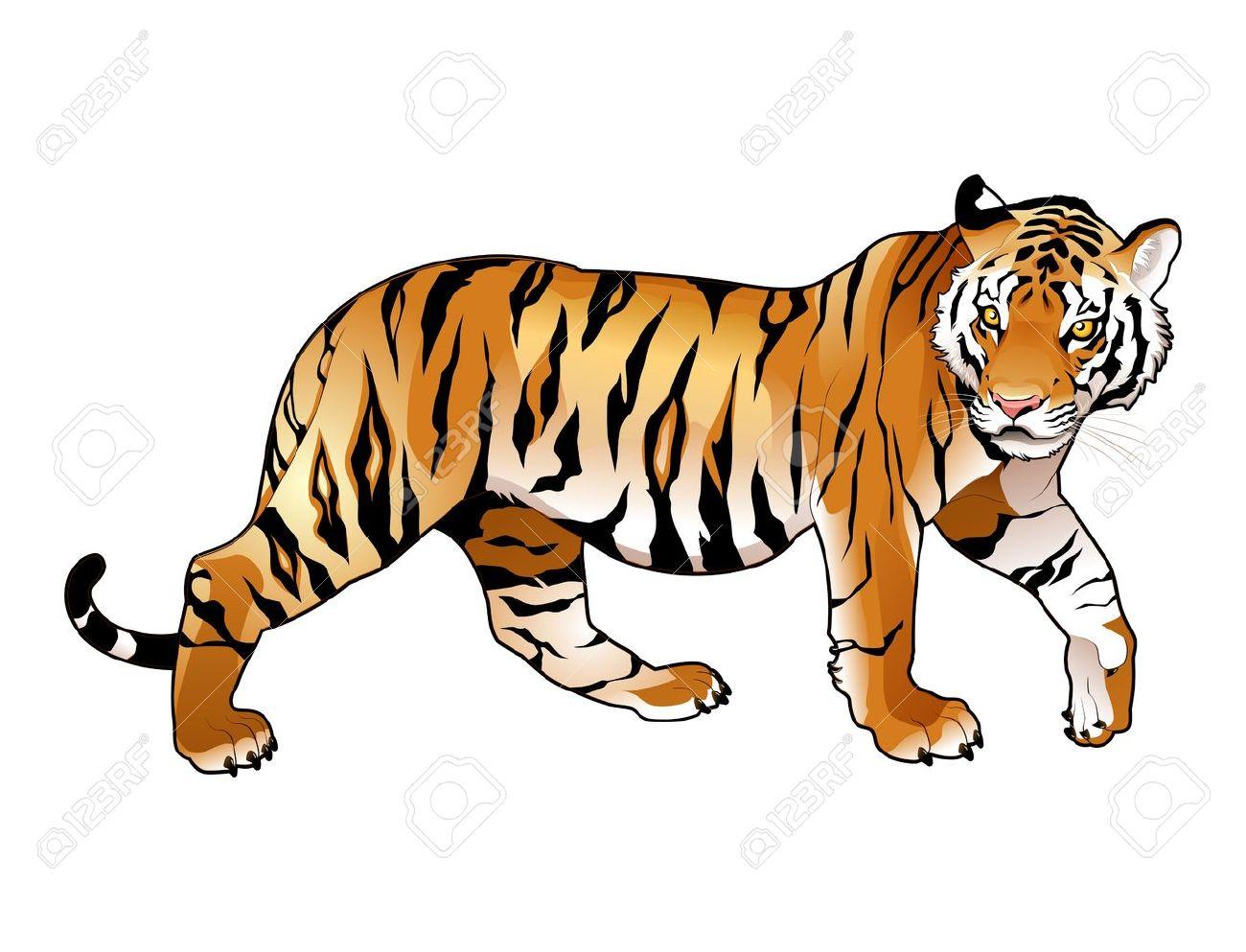 tiger clipart face