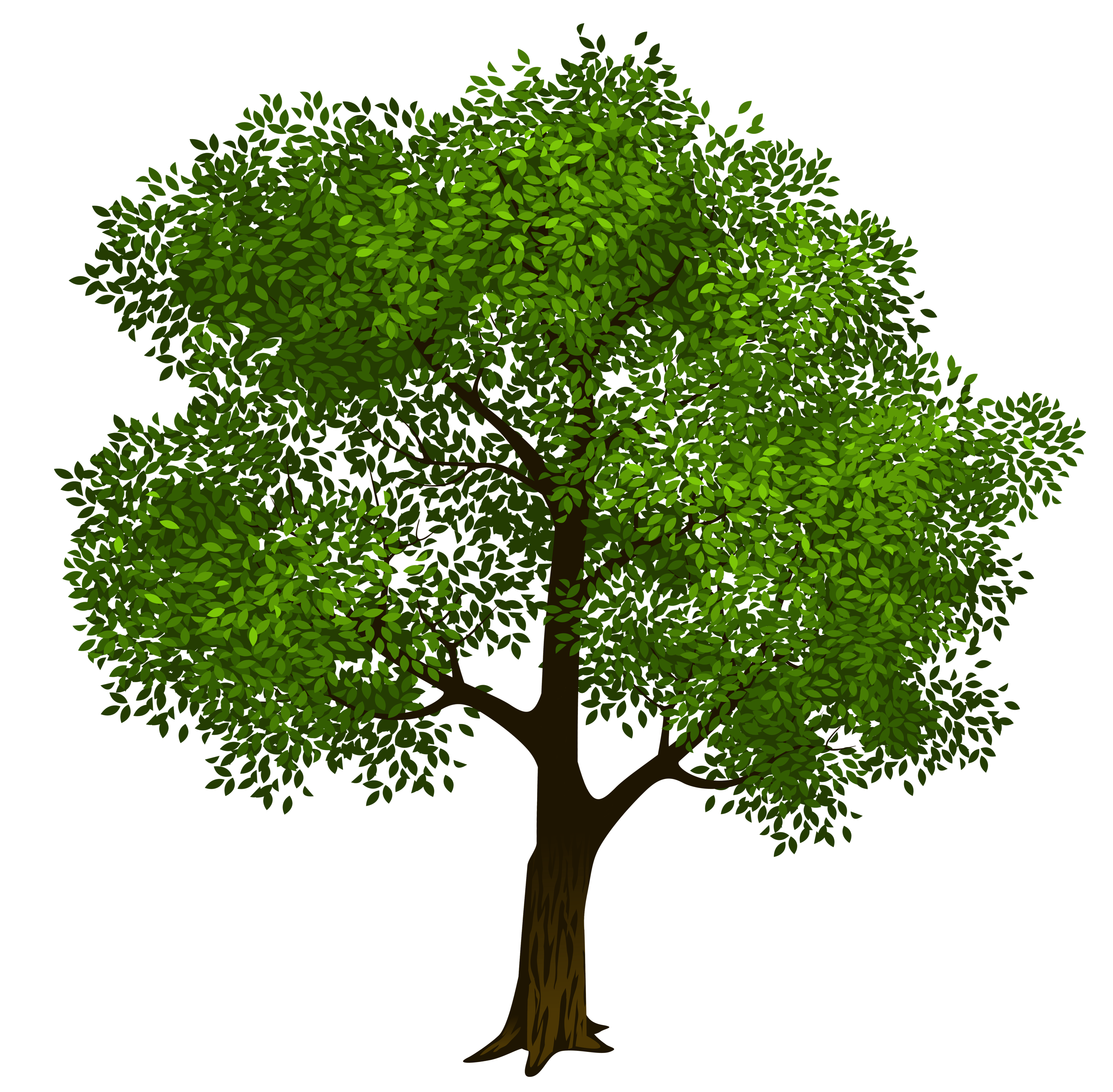 Transparent green tree clipart picture 6