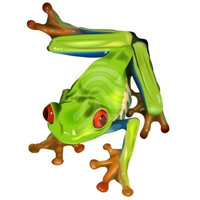Tree Frog Clip Art Black And White Tree Frog Clipart3 Jpg
