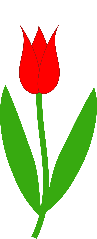 Tulip border clipart