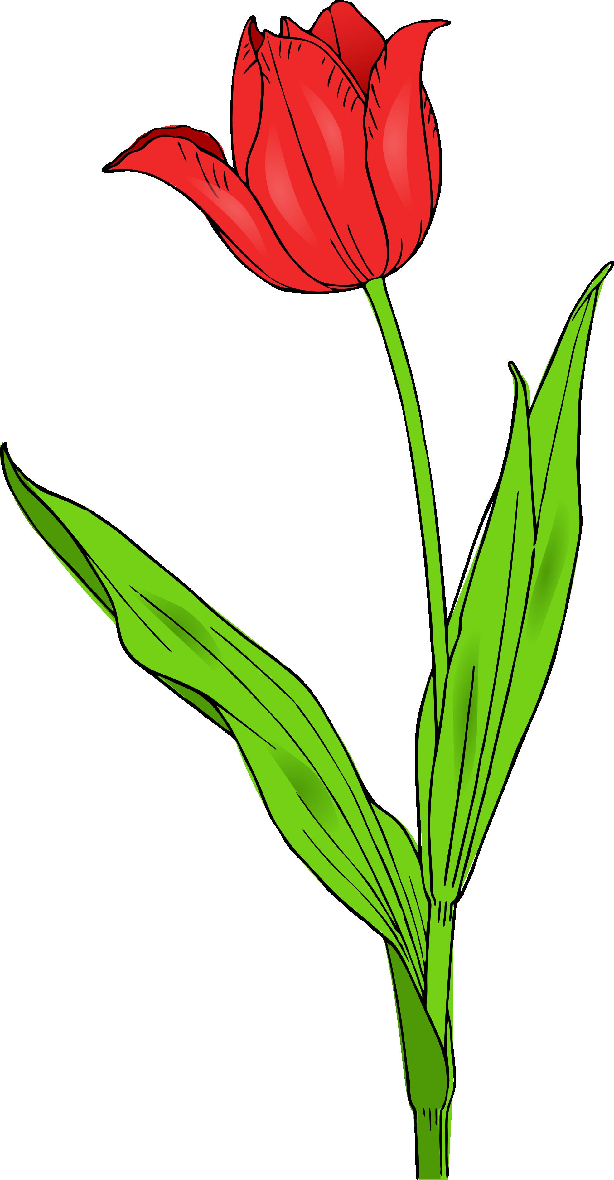 Tulip clip art clipart