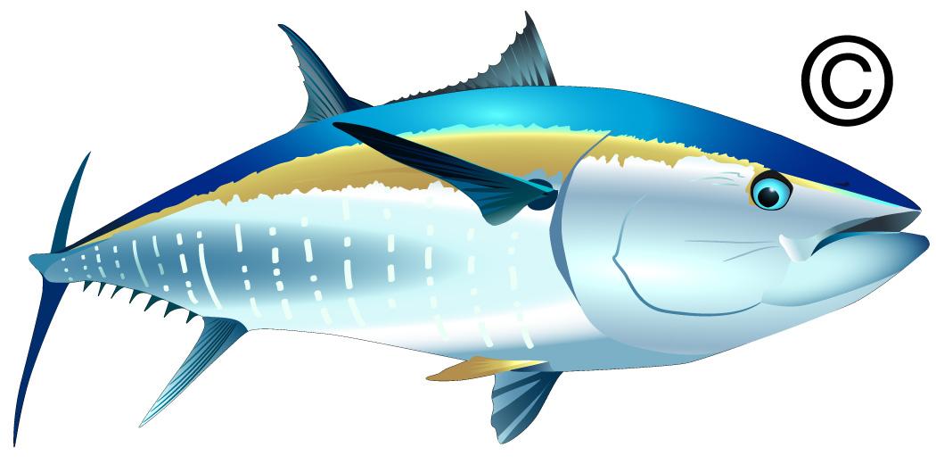 Tuna Fish Clip Art Clipart Panda Free Clipart Images