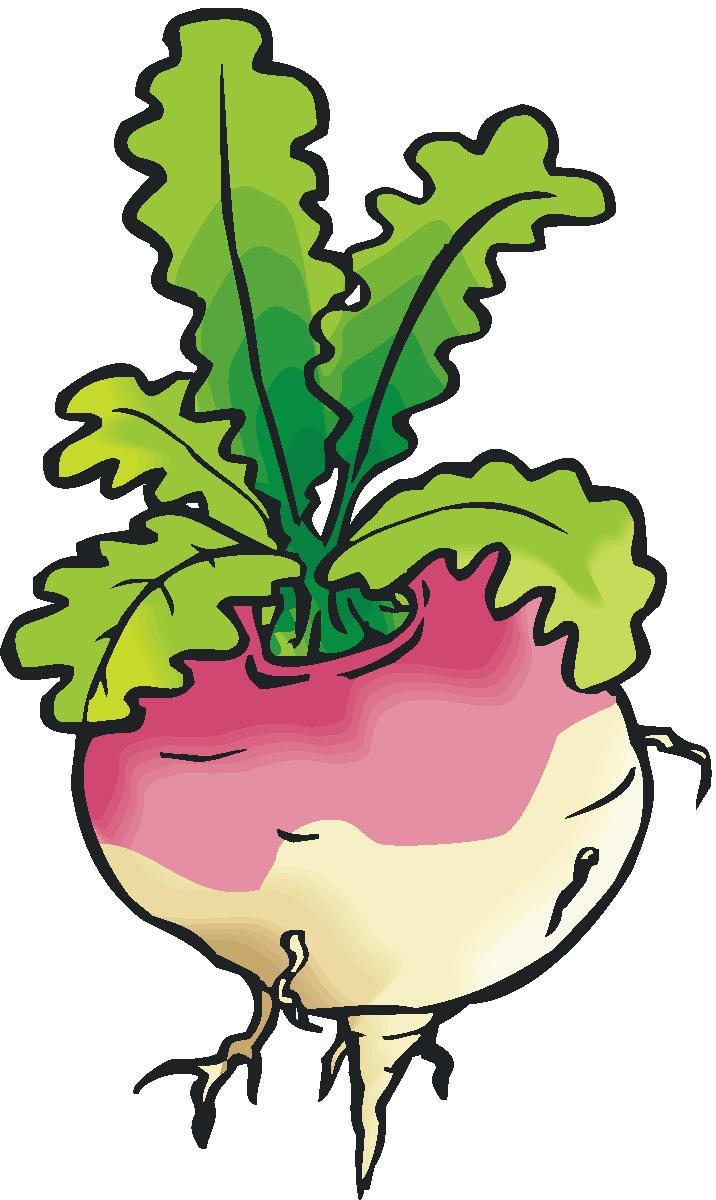 Turnip clipart clipartall