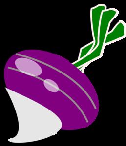 Turnip Clip Art