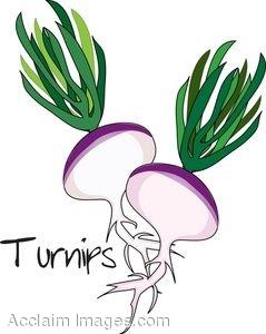 ... Turnip Clipart ...