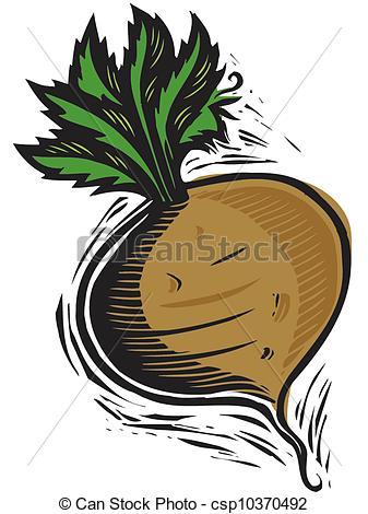 Turnip Stock Illustration