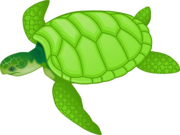 Turtle clip art 3