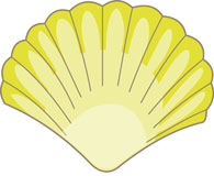 variety seashells with white background clipart. Size: 58 Kb