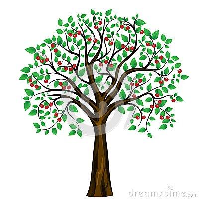 Vector Cherry Tree On White .