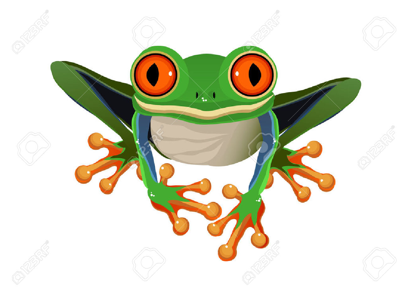 Vector - red Eyed Tree Frog