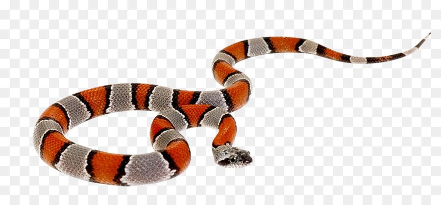 Snake Reptile Cobra Clip art - venkateswara