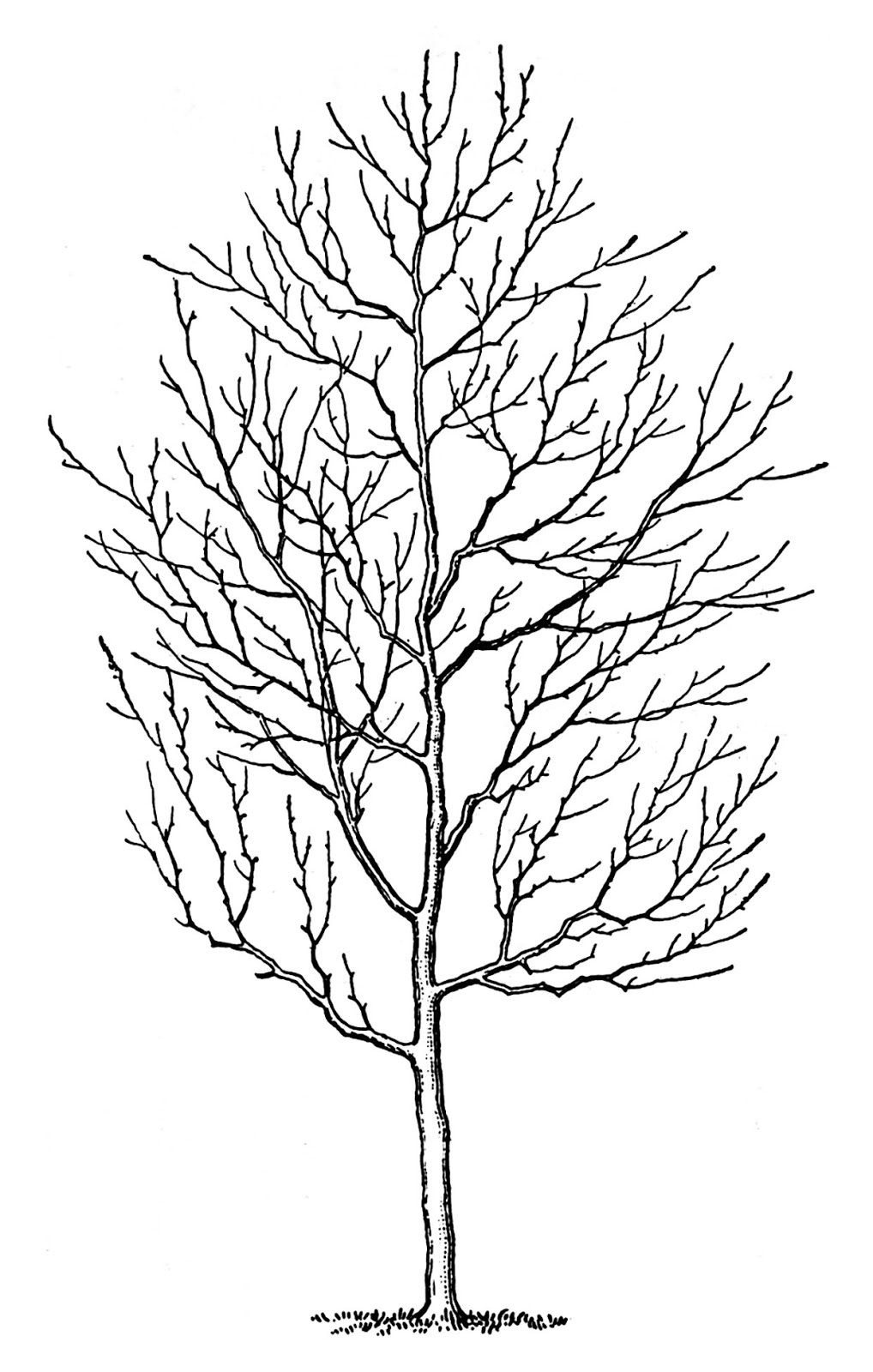 Vintage Clip Art Winter Trees The Graphics Fairy