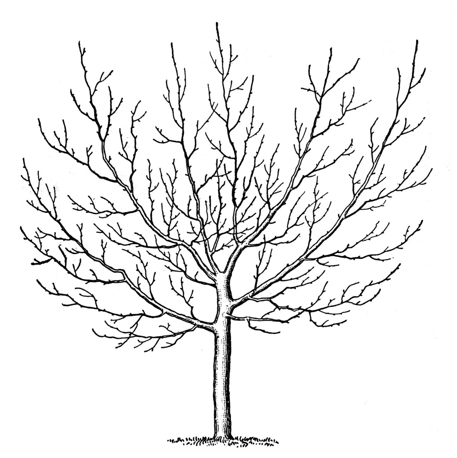 Vintage Clip Art u2013 Winter - Winter Tree Clip Art
