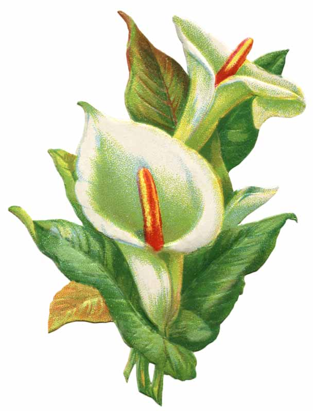 Vintage Easter Lily Clip Art - Click for printable larger image