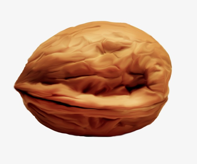 walnut, Walnut Material, Hand Painted Walnuts, Cartoon Walnut PNG Image and  Clipart