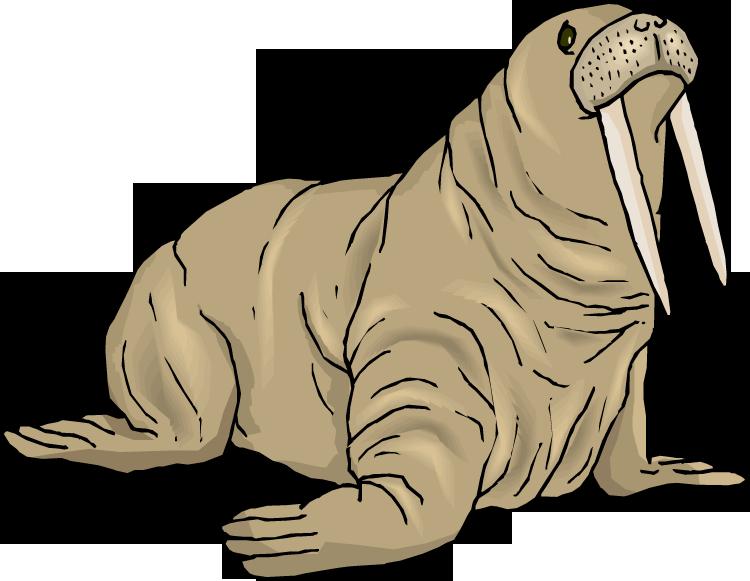 Walrus Clip Art